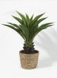 10 1/4in Water Hyacinth Basket