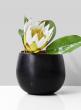 6 x 5in Gold & Black Vase