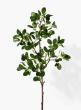 Milan Leaf Bush