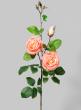 35in Peach Rose Spray