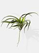 fake air plant display prop plants