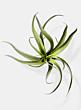 frosted tillandsia fake display plants