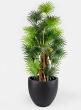 57in Fan Palm Tree