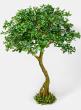 75in Schefflera Umbrella Tree Plant