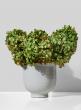 5 3/4in Glazed Ceramic Pedestal Bowl