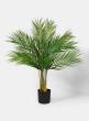 28in Hawaii Kwai Palm Tree