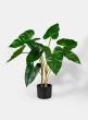 27in Anthurium Leaf Plant