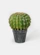 7in Barrel Cactus