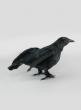 Flying Black Crow