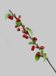 37in Red Berry Branch