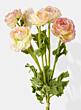 pink yellow ranunculus bouquet wedding flowers