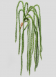 26in Crassula Succulent Vine
