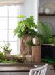 6in Paulownia Wood Pot