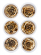 Preserved Gold Roses, Set of 6