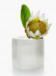 4in x 4in Moroccan Selenite Trunk Vase