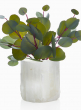 5in x 5in Moroccan Selenite Trunk Vase