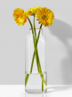 11 1/2in H Small Mouth, Gold Rim Glass Vase