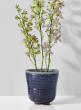 5in Blue Ceramic Ripple Pot
