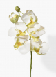 20in White Phalaenopsis