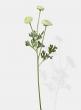 white ranunuculus silk flowers