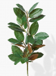 32in Magnolia Leaf Garland