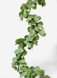 63in Silver Dollar Eucalyptus Garland