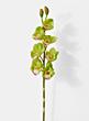green cymbidium orchid silk flowers