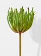chalk stick succulent artificial plants