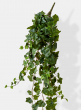 classic wedding bouquet english ivy hanger