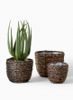 grass basket with fake aloe plant display