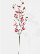 pink magnolia flowering branch