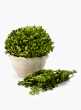 preserved boxwood branches potted ball