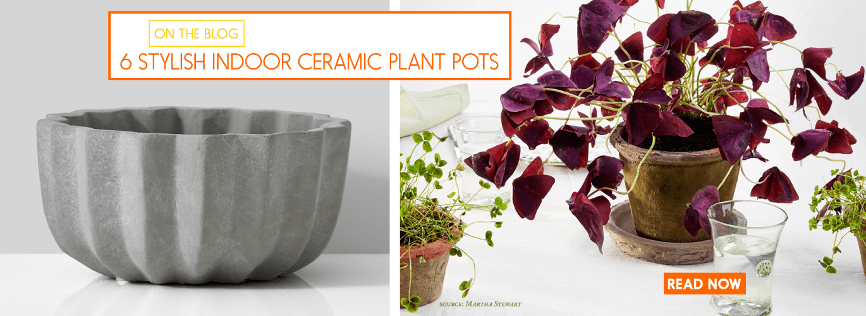 stylish indoor ceramic plant pots how to choose